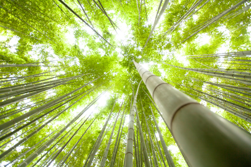 Kamakura City「Japanese bamboo forest」:スマホ壁紙(11)