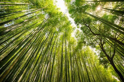 Arashiyama「Japanese Bamboo Forest」:スマホ壁紙(3)