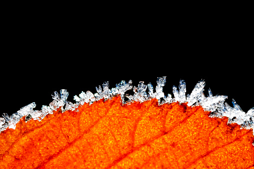 Frost「Hoarfrost at edge of autumn leaf in front of black background」:スマホ壁紙(12)