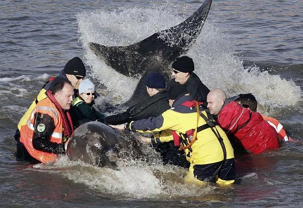 テムズ川「Whale Spotted In River Thames」:写真・画像(15)[壁紙.com]