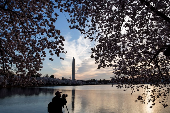 Cherry Blossom「Washington D.C.'s Cherry Blossoms Bloom」:写真・画像(16)[壁紙.com]