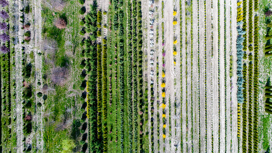 Vaud Canton「Tree nursery, Genolier, Vaud Canton, Switzerland」:スマホ壁紙(15)