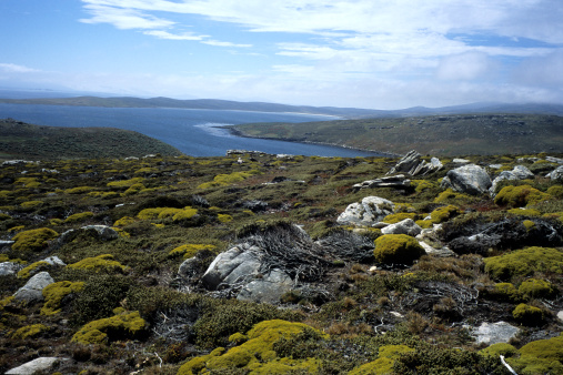 Falkland Islands「Mosses and Lichen on rocks.」:スマホ壁紙(11)
