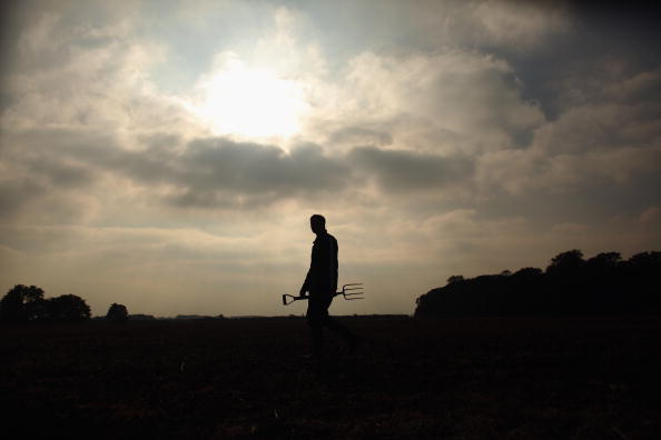 Harvesting「A Potato Farmer Harvests His Autumn Crop」:写真・画像(14)[壁紙.com]
