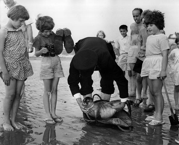 Animal Wildlife「Seal Rescue」:写真・画像(16)[壁紙.com]
