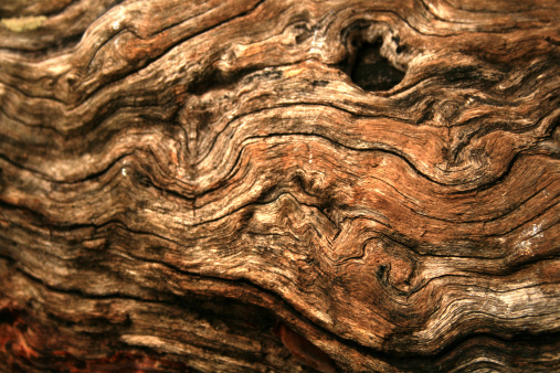 Log「Gnarly wood texture」:スマホ壁紙(1)