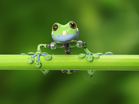 Frog「treefrog on a branch」:スマホ壁紙(15)