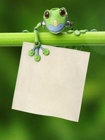 かわいい「枝にアオガエルのなかま」:スマホ壁紙(18)