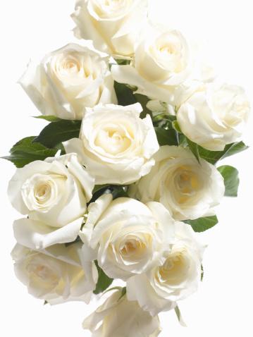 薔薇「Roses, White」:スマホ壁紙(15)