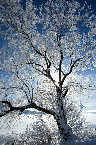 The Nature Conservancy「Sunshine through snowy tree in remote landscape」:スマホ壁紙(14)