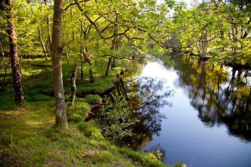 アーン川「Wooded banks of the River Earn, Perthshire」:スマホ壁紙(2)