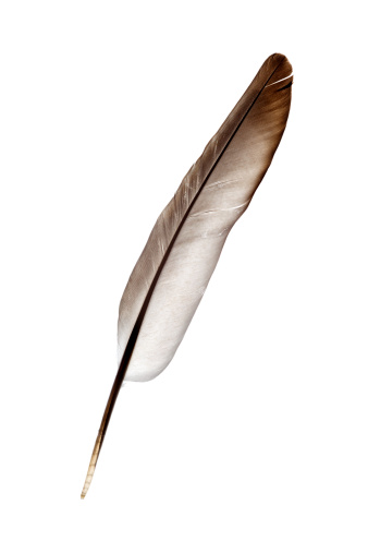 Pigeon「dove feather isolated on white」:スマホ壁紙(16)