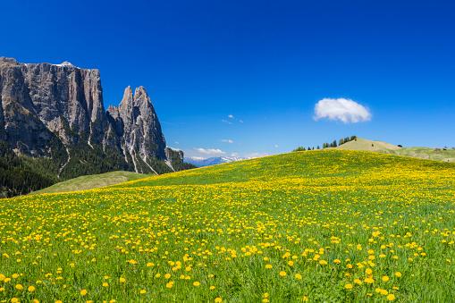 Alto Adige - Italy「Alpe di Siusi, in Springtime with Mount Schlern in South Tyrol, Italy」:スマホ壁紙(0)