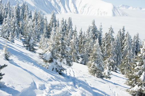 Ski Resort「Snowy trees」:スマホ壁紙(1)