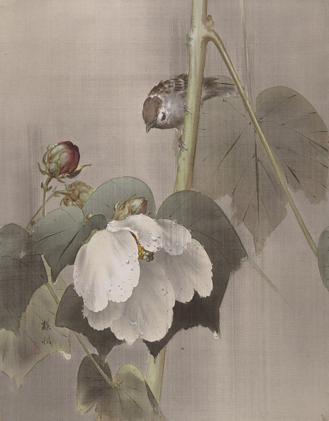 Topics「Cotton Rose Mallows In The Rain」:写真・画像(0)[壁紙.com]