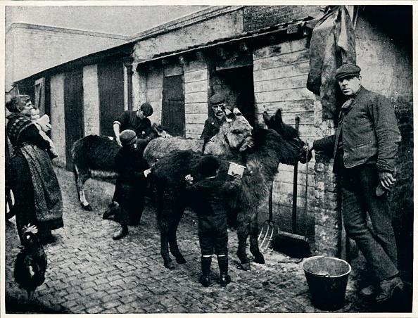 Working Animal「Grooming costers' donkeys, London, c1903 (1903)」:写真・画像(13)[壁紙.com]