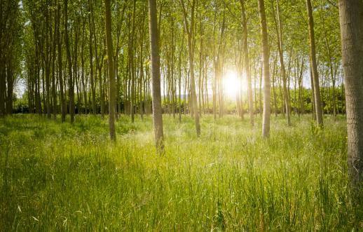 Copse「Green mystic Forest at sunrise」:スマホ壁紙(5)