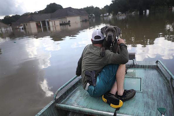 動物「Torrential Rains Bring Historic Floods To Southern Louisiana」:写真・画像(14)[壁紙.com]