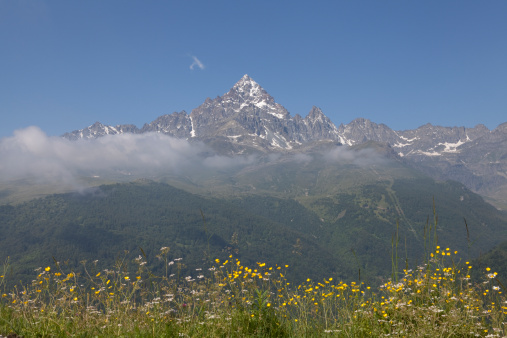 Piedmont - Italy「View past alpine meadow to snow capped mountain」:スマホ壁紙(11)
