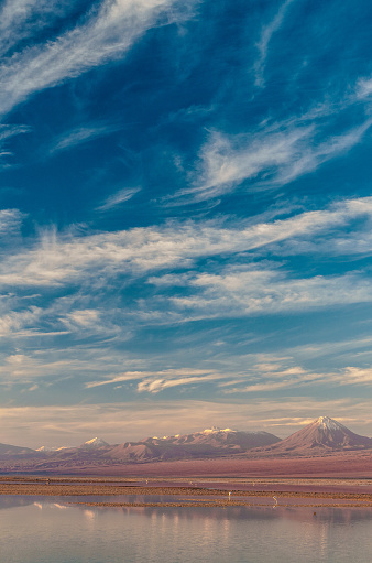 Animal「Pink flamingoes in Laguna Chaxa, Atacama Salt Flats, with snow-capped volcanoes in the background topped by dramatic clouds in blue sky near San Pedro de Atacama, Chile」:スマホ壁紙(4)