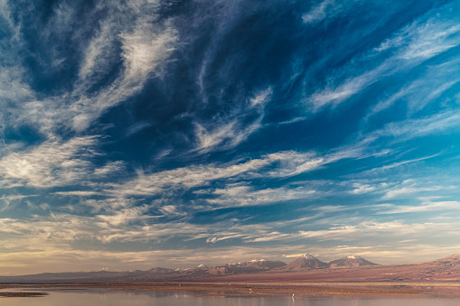 Animal「Pink flamingoes in Laguna Chaxa, Atacama Salt Flats, with snow-capped volcanoes in the background topped by dramatic clouds in blue sky near San Pedro de Atacama, Chile」:スマホ壁紙(3)