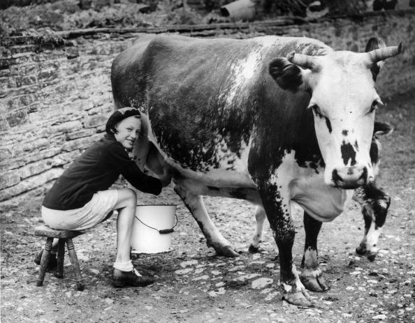 Hand「Milking The Cow」:写真・画像(12)[壁紙.com]