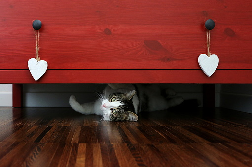 子猫「Cat lying under a chest of drawers」:スマホ壁紙(8)
