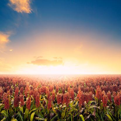 Queensland「Farm field at sunrise」:スマホ壁紙(11)