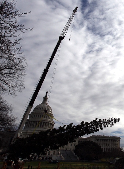 Stanislaus National Forest「Capitol Christmas Tree Arrives In Washington」:写真・画像(14)[壁紙.com]