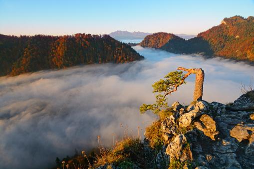 Tatra Mountains「Sunrise」:スマホ壁紙(14)