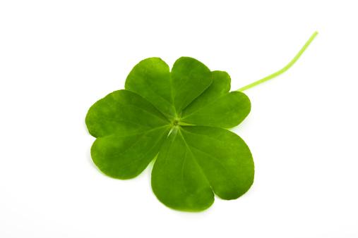 Clover Leaf Shape「lucky clover」:スマホ壁紙(16)