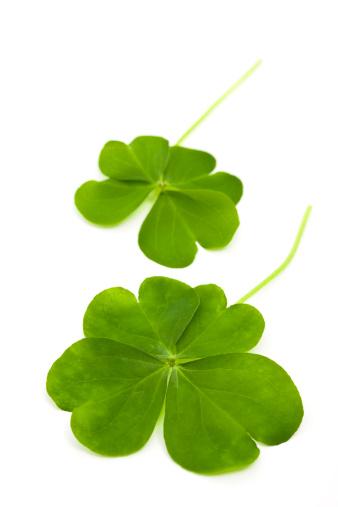 Clover Leaf Shape「lucky clovers」:スマホ壁紙(13)