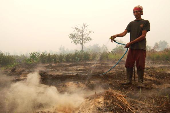 Crop - Plant「Slash And Burn Method Still Used By Farmers」:写真・画像(16)[壁紙.com]
