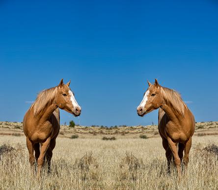 Horse「Horses, mirror image」:スマホ壁紙(0)