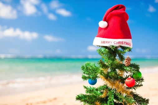 Pine Cone「christmas on a beach」:スマホ壁紙(5)
