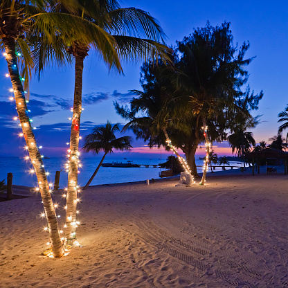 Cayman Islands「Christmas on the Beach, Cayman Islands」:スマホ壁紙(18)