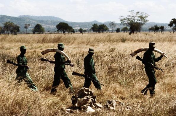 Tom Stoddart Archive「Poachers」:写真・画像(9)[壁紙.com]