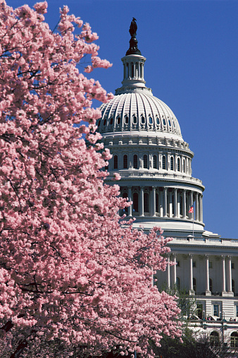 2002「USA, Washington, D.C., cherry tree in blossom, spring」:スマホ壁紙(5)
