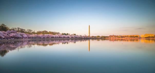 Cherry trees at evening「Washington DC in Spring」:スマホ壁紙(5)