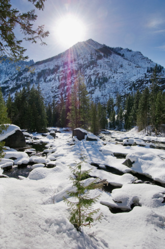 ウェナチー国有林「USA, Washington State, Wenatchee National Forest, winter landscape」:スマホ壁紙(14)