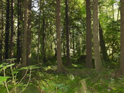 Hoh River Valley「USA, Washington, Olympic National Park, foliage in Hoh Rainforest」:スマホ壁紙(11)