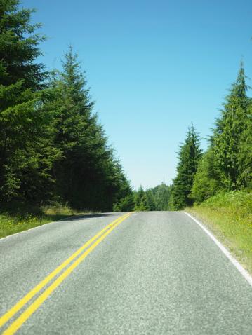 Hoh River Valley「USA, Washington, Olympic National Park, tree-lined highway」:スマホ壁紙(10)