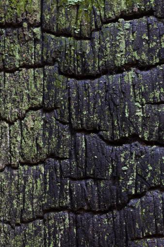 Deforestation「USA, Washington State, Kitsap County, Hansville, Burnt Cedar stump」:スマホ壁紙(18)