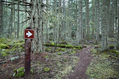Hiking「USA, Washington, San Juan County, Orcas Island, Path in forest」:スマホ壁紙(15)