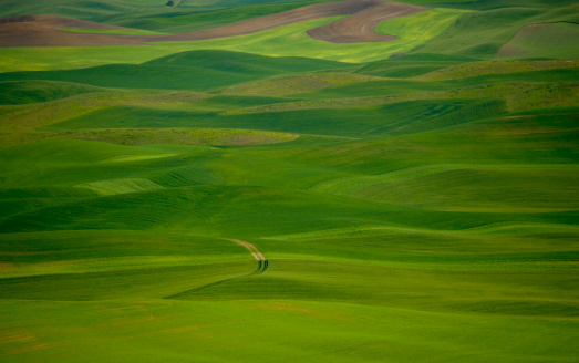 Rolling Landscape「USA, Washington, Palouse, field of wheat and peas, spring」:スマホ壁紙(13)