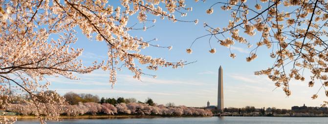 National Monument「XXXL: Washington DC cherry blossoms and monument」:スマホ壁紙(9)