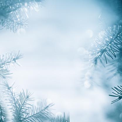 雪「パインツリーの枠組」:スマホ壁紙(0)