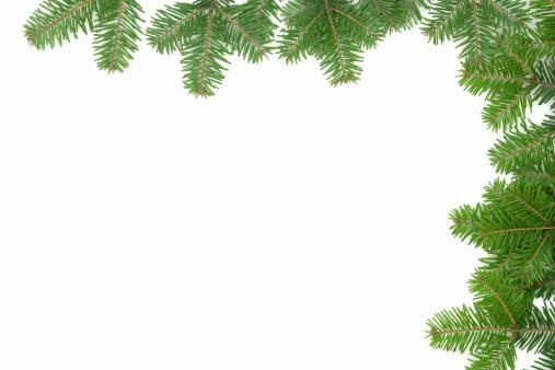 Needle - Plant Part「Pine Tree Frame」:スマホ壁紙(18)