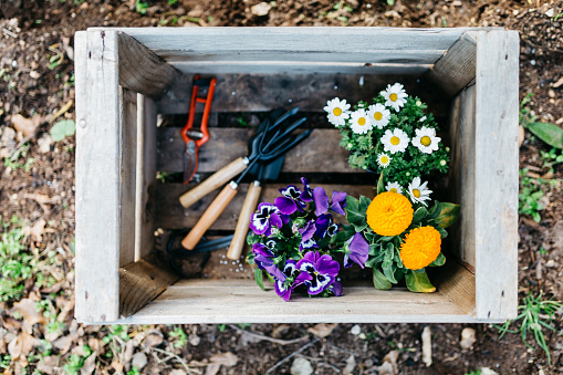 Planting「Flowers and gardening tools in a crate in garden」:スマホ壁紙(3)