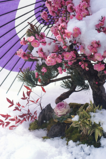 梅の花「Flowers and paper umbrella on snowfield」:スマホ壁紙(19)